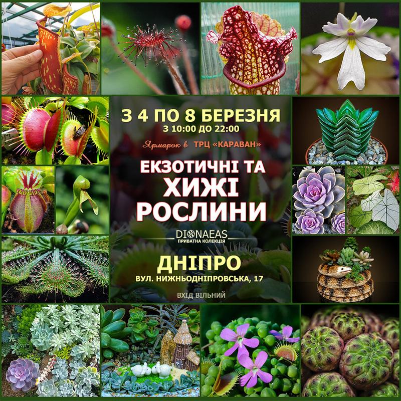 Екзотичні та хижі рослини