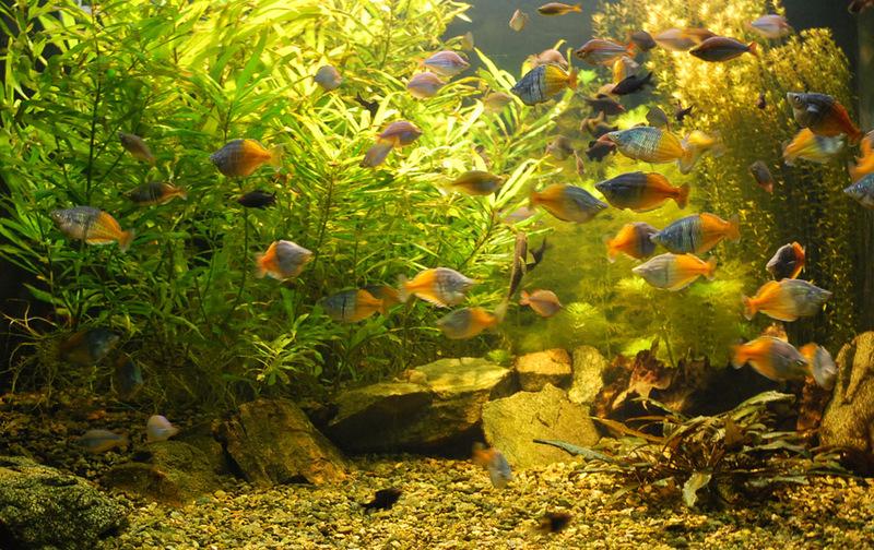 Постоянная выставка рыб и пресмыкающихся