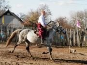 Посмотреть афишу: Казацкий лагерь