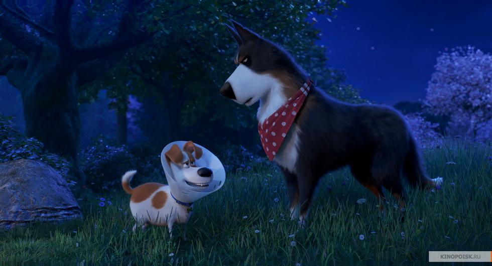 Тайная жизнь домашних животных 2