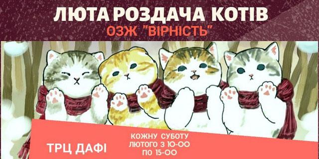 ЛЮТА Раздача котов