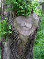 Любви все возрасты… Парк Глобы