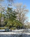 Первый снег в парке Глобы