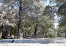 Первый снег. Просп. Пушкина