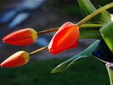 Цветы уцелевшие после снегопада.