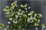 Хрен....цветы.