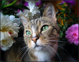 Любитель цветов