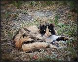 Отдыхающий Кот