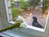 Любовь и голубь