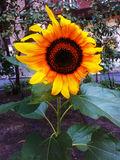 Цветок у дома