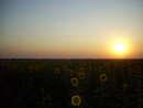 закат в районе пос Трудолюбовка Пятихатский р-н