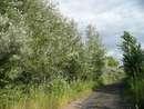Дороги Приднепровска