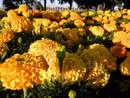 Сквозь цветы к Днепру