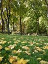 Осення пора - очей очарованье