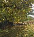 осень в гавриловке, покровский р-н