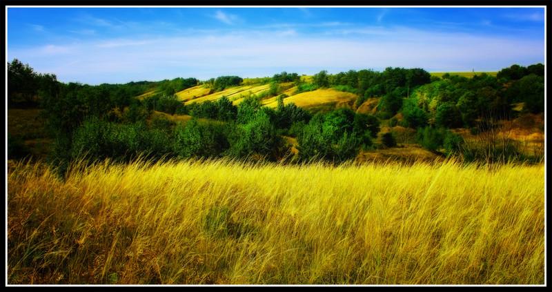 украинская лесостепь фотообои цель набор волонтеров