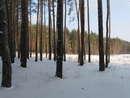 Лес, солнце,ветер