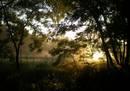 Утро в лесу на жм Фрунзенский