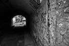 Кот в конце тоннеля
