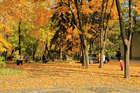 В парке золотом