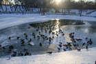 Морозный февраль (2)