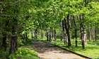Аллейка в Севастопольском парке