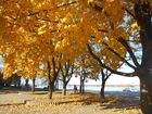 Золотая осень на набережной.