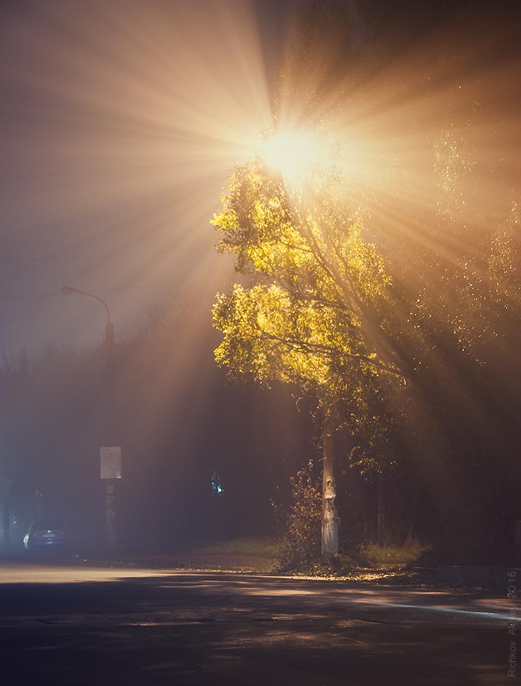 Ночные Туманы