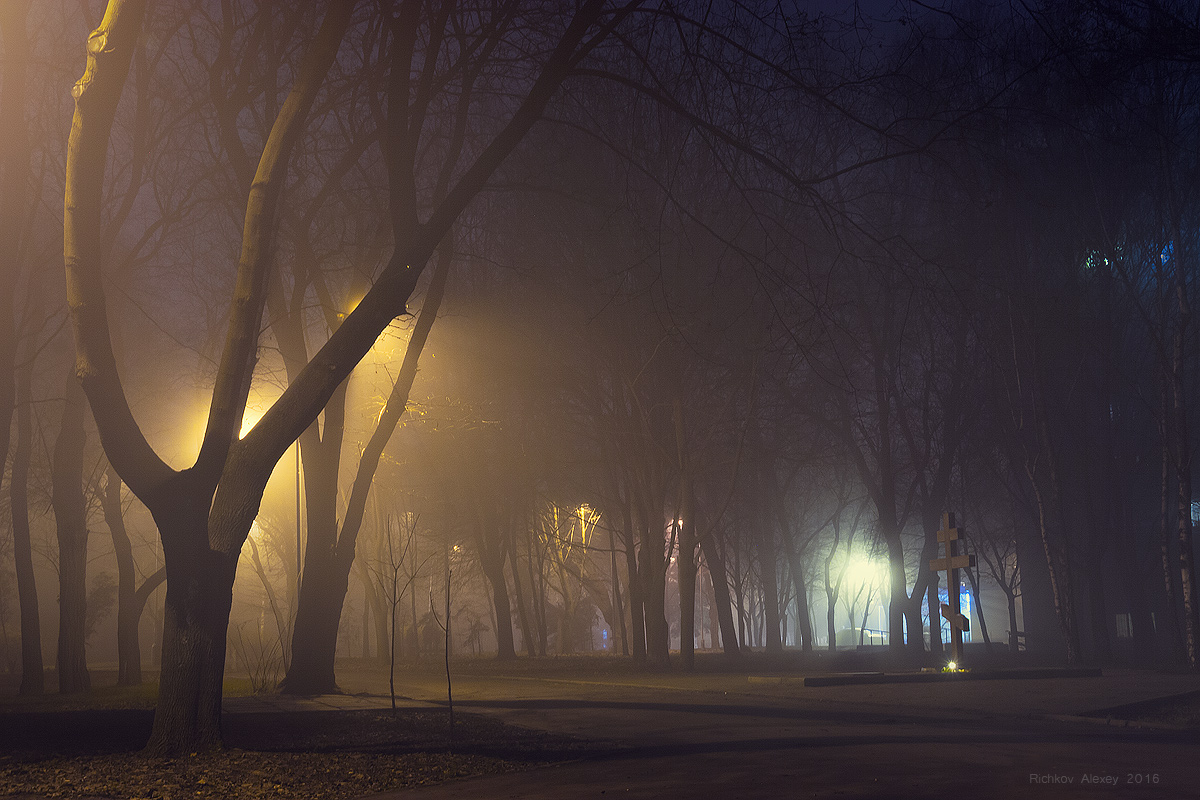 Туман в ночном парке