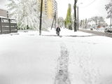 После снегопада на ул. Н.Алексеенко (Чичерина)