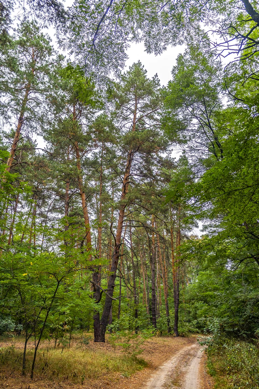 В лесу, Могилёв