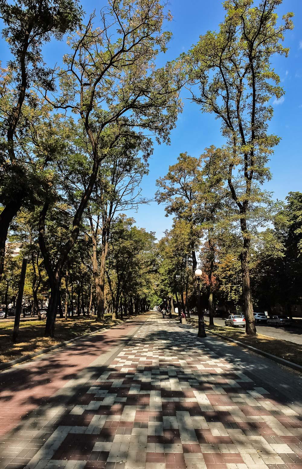 Большие деревья проспекта