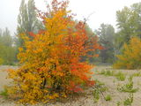 Воронцовский пляж осенью