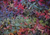 Наши цвета листьев