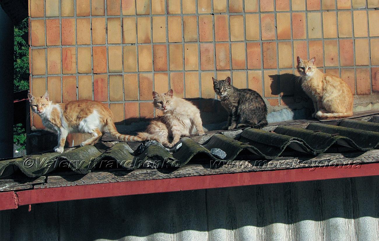 Коты в придачу :)