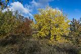Осень в саду с.Могилёв-2