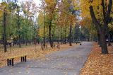 Заглянула осень