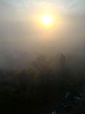 Тополь в тумане