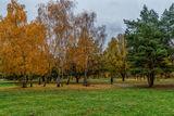 Тропинка в осень