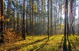 Утро в лесу с.Могилёв