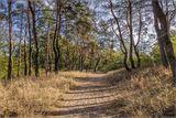 Утро в лесу. с. Орловщина :)