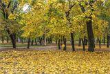 Осень золотая :)
