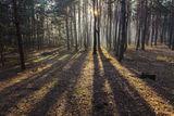 Утро в лесу, с.Могилёв-2
