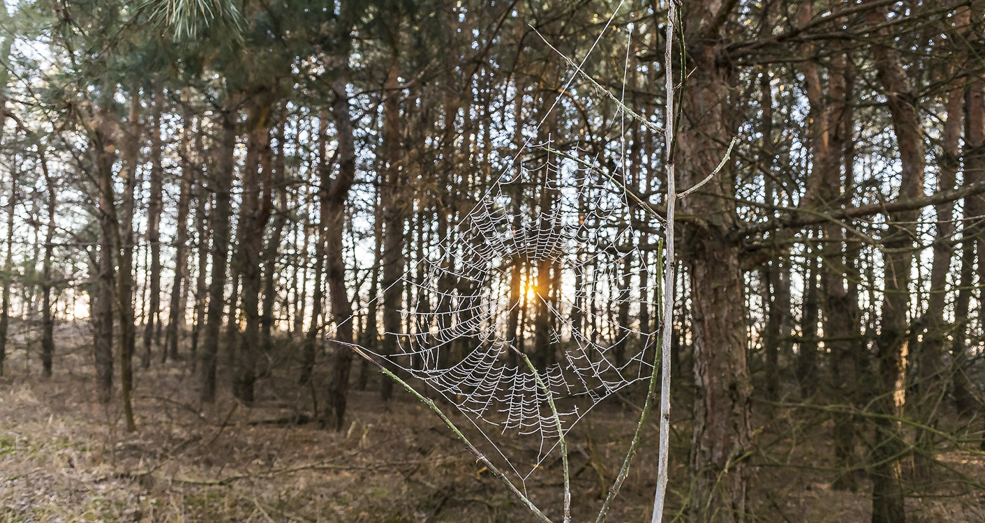 Раннее утро в лесу, с.Могилёв