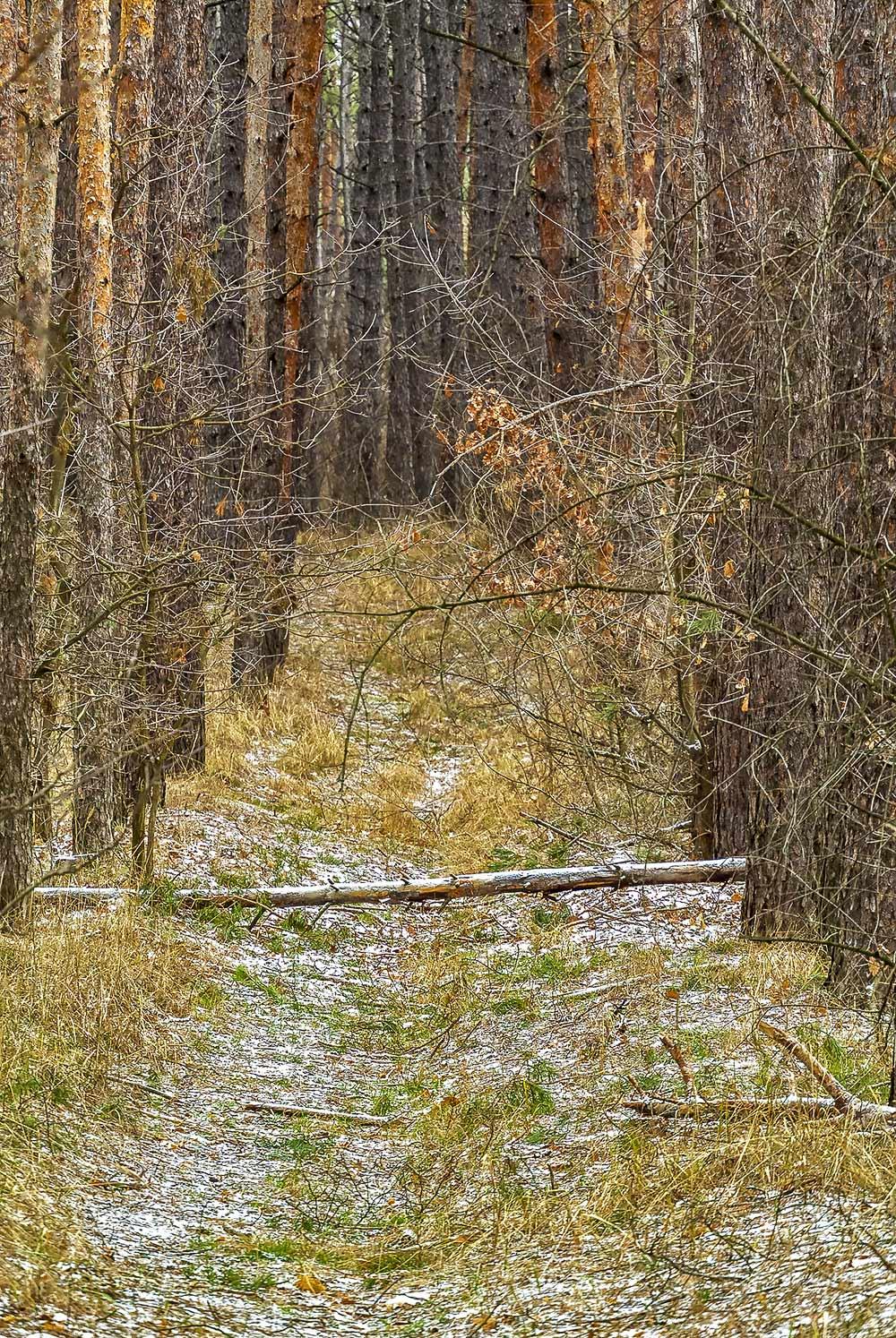 В лесу, с.Могилёв