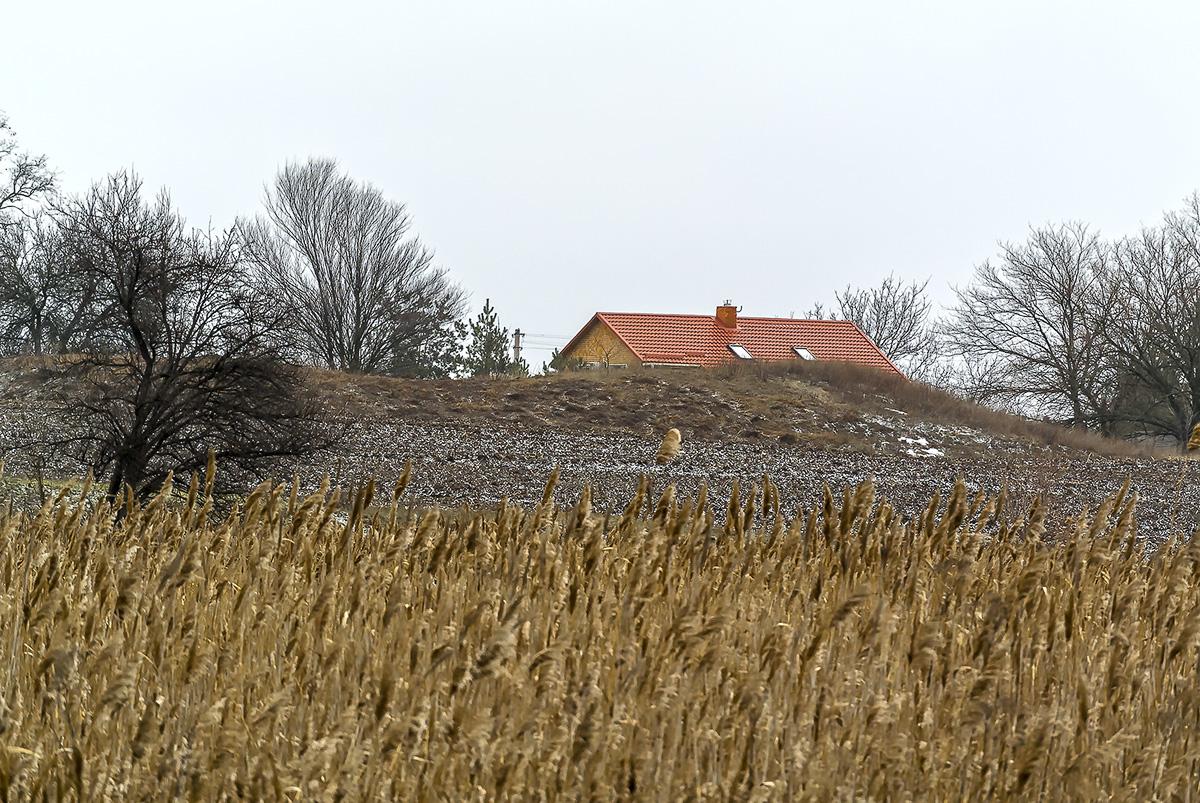 Красная крыша, с.Могилёв