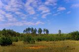 Село Могилёв, лес