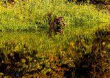 Фиолетовые листья, Орель, с. Могилёв