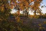 Осенний велосипедист