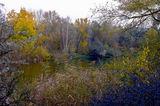 Вечер, канал Днепр-Донбасс, кусты тёрна, Царичанский район
